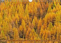 Lust auf NaTour - Bäume (Wandkalender 2019 DIN A4 quer) - Produktdetailbild 11