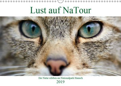 Lust auf NaTour - Nationalpark Hainich (Wandkalender 2019 DIN A3 quer), Andreas Riedmiller
