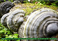 Lust auf NaTour - Nationalpark Hainich (Wandkalender 2019 DIN A3 quer) - Produktdetailbild 2