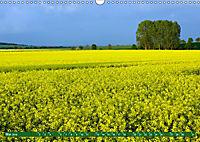 Lust auf NaTour - Nationalpark Hainich (Wandkalender 2019 DIN A3 quer) - Produktdetailbild 5