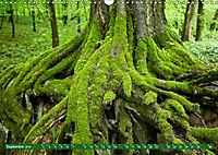 Lust auf NaTour - Nationalpark Hainich (Wandkalender 2019 DIN A3 quer) - Produktdetailbild 9