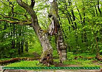 Lust auf NaTour - Nationalpark Hainich (Wandkalender 2019 DIN A3 quer) - Produktdetailbild 11