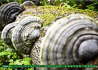 Lust auf NaTour - Nationalpark Hainich (Wandkalender 2019 DIN A2 quer) - Produktdetailbild 2
