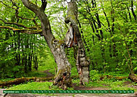 Lust auf NaTour - Nationalpark Hainich (Wandkalender 2019 DIN A2 quer) - Produktdetailbild 11