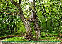 Lust auf NaTour - Nationalpark Hainich (Wandkalender 2019 DIN A4 quer) - Produktdetailbild 11