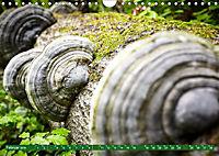 Lust auf NaTour - Nationalpark Hainich (Wandkalender 2019 DIN A4 quer) - Produktdetailbild 2