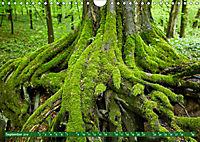 Lust auf NaTour - Nationalpark Hainich (Wandkalender 2019 DIN A4 quer) - Produktdetailbild 9