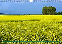 Lust auf NaTour - Nationalpark Hainich (Wandkalender 2019 DIN A4 quer) - Produktdetailbild 5