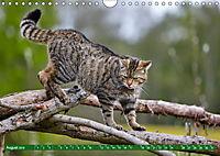 Lust auf NaTour - Nationalpark Hainich (Wandkalender 2019 DIN A4 quer) - Produktdetailbild 8