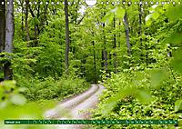 Lust auf NaTour - Nationalpark Hainich (Wandkalender 2019 DIN A4 quer) - Produktdetailbild 1