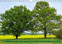 Lust auf NaTour - Nationalpark Hainich (Wandkalender 2019 DIN A4 quer) - Produktdetailbild 3