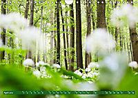 Lust auf NaTour - Nationalpark Hainich (Wandkalender 2019 DIN A4 quer) - Produktdetailbild 4