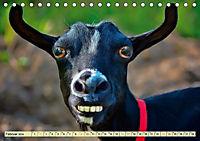 Lustig und verrückt - der ganz andere Tierkalender (Tischkalender 2019 DIN A5 quer) - Produktdetailbild 2