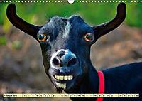 Lustig und verrückt - der ganz andere Tierkalender (Wandkalender 2019 DIN A3 quer) - Produktdetailbild 2