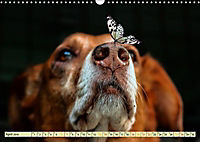 Lustig und verrückt - der ganz andere Tierkalender (Wandkalender 2019 DIN A3 quer) - Produktdetailbild 4