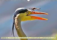 Lustig und verrückt - der ganz andere Tierkalender (Wandkalender 2019 DIN A3 quer) - Produktdetailbild 9