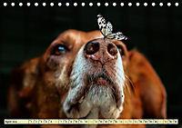 Lustig und verrückt - der ganz andere Tierkalender (Tischkalender 2019 DIN A5 quer) - Produktdetailbild 4