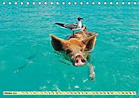 Lustig und verrückt - der ganz andere Tierkalender (Tischkalender 2019 DIN A5 quer) - Produktdetailbild 10