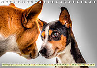 Lustig und verrückt - der ganz andere Tierkalender (Tischkalender 2019 DIN A5 quer) - Produktdetailbild 12