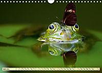Lustig und verrückt - der ganz andere Tierkalender (Wandkalender 2019 DIN A4 quer) - Produktdetailbild 6
