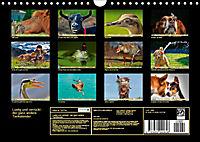 Lustig und verrückt - der ganz andere Tierkalender (Wandkalender 2019 DIN A4 quer) - Produktdetailbild 13