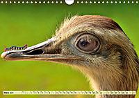 Lustig und verrückt - der ganz andere Tierkalender (Wandkalender 2019 DIN A4 quer) - Produktdetailbild 3