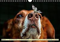 Lustig und verrückt - der ganz andere Tierkalender (Wandkalender 2019 DIN A4 quer) - Produktdetailbild 4