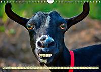 Lustig und verrückt - der ganz andere Tierkalender (Wandkalender 2019 DIN A4 quer) - Produktdetailbild 2