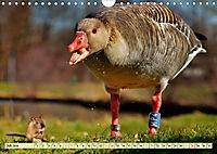 Lustig und verrückt - der ganz andere Tierkalender (Wandkalender 2019 DIN A4 quer) - Produktdetailbild 7