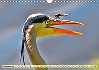 Lustig und verrückt - der ganz andere Tierkalender (Wandkalender 2019 DIN A4 quer) - Produktdetailbild 9