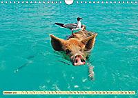 Lustig und verrückt - der ganz andere Tierkalender (Wandkalender 2019 DIN A4 quer) - Produktdetailbild 10
