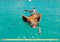 Lustig und verrückt - der ganz andere Tierkalender (Wandkalender 2019 DIN A3 quer) - Produktdetailbild 10