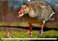 Lustig und verrückt - der ganz andere Tierkalender (Wandkalender 2019 DIN A3 quer) - Produktdetailbild 7