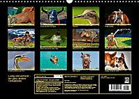 Lustig und verrückt - der ganz andere Tierkalender (Wandkalender 2019 DIN A3 quer) - Produktdetailbild 13