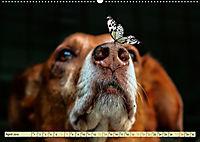 Lustig und verrückt - der ganz andere Tierkalender (Wandkalender 2019 DIN A2 quer) - Produktdetailbild 4