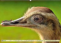 Lustig und verrückt - der ganz andere Tierkalender (Wandkalender 2019 DIN A2 quer) - Produktdetailbild 3