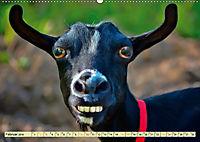 Lustig und verrückt - der ganz andere Tierkalender (Wandkalender 2019 DIN A2 quer) - Produktdetailbild 2