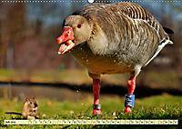 Lustig und verrückt - der ganz andere Tierkalender (Wandkalender 2019 DIN A2 quer) - Produktdetailbild 7