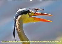 Lustig und verrückt - der ganz andere Tierkalender (Wandkalender 2019 DIN A2 quer) - Produktdetailbild 9
