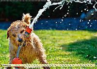 Lustig und verrückt - der ganz andere Tierkalender (Wandkalender 2019 DIN A2 quer) - Produktdetailbild 8