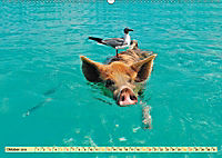 Lustig und verrückt - der ganz andere Tierkalender (Wandkalender 2019 DIN A2 quer) - Produktdetailbild 10