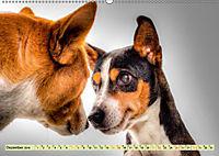 Lustig und verrückt - der ganz andere Tierkalender (Wandkalender 2019 DIN A2 quer) - Produktdetailbild 12