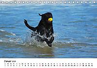 Lustige Strandhunde (Tischkalender 2019 DIN A5 quer) - Produktdetailbild 1