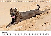 Lustige Strandhunde (Tischkalender 2019 DIN A5 quer) - Produktdetailbild 6