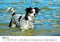 Lustige Strandhunde (Tischkalender 2019 DIN A5 quer) - Produktdetailbild 3