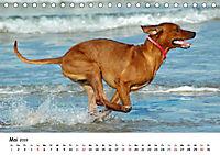 Lustige Strandhunde (Tischkalender 2019 DIN A5 quer) - Produktdetailbild 5