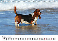 Lustige Strandhunde (Tischkalender 2019 DIN A5 quer) - Produktdetailbild 12