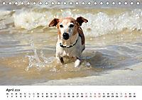 Lustige Strandhunde (Tischkalender 2019 DIN A5 quer) - Produktdetailbild 4