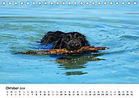 Lustige Strandhunde (Tischkalender 2019 DIN A5 quer) - Produktdetailbild 10