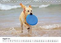 Lustige Strandhunde (Tischkalender 2019 DIN A5 quer) - Produktdetailbild 8